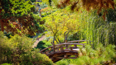 Photo of The Huntington's Botanical Gardens – A Little Eden in Los Angeles